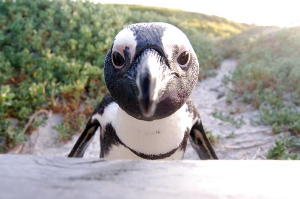 penguinupclose